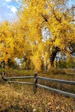 Preview iPhone wallpaper Autumn, trees, yellow leaves, grass, fence