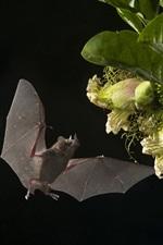 Bats, flowers, night