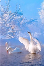 Preview iPhone wallpaper Beautiful winter morning, lake, trees, snow, white swans