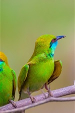 Preview iPhone wallpaper Bee-eaters, two green birds