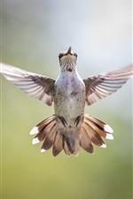 Vôo de pássaro, asas, bokeh