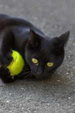 Preview iPhone wallpaper Black cat play a ball on ground
