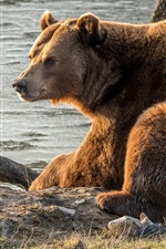 Preview iPhone wallpaper Brown bear rest, river