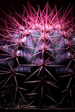 Preview iPhone wallpaper Cactus, needle, houseplants