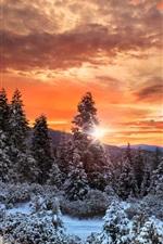 iPhone обои Канада, облака, лес, деревья, снег, зима, закат