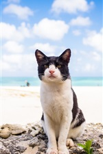 Preview iPhone wallpaper Cat look at you, beach, sea, clouds