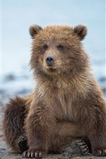 Preview iPhone wallpaper Cute bear cub, Alaska