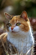 Preview iPhone wallpaper Cute cat, summer