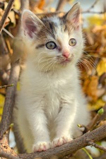 Preview iPhone wallpaper Cute furry kitten on tree