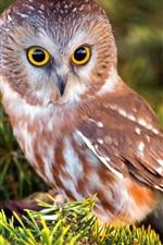 Preview iPhone wallpaper Cute little owl, bird, twigs