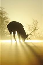 Preview iPhone wallpaper Deer, silhouette, fog, sun rays, morning