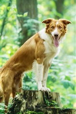 Dog in the forest, green, stump