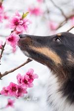 Dog, spring flowers