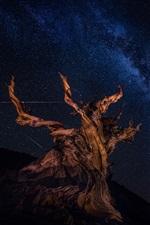 iPhone fondos de pantalla Árbol seco, estrellado, cielo, hermosa noche