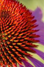 iPhone壁紙のプレビュー エキナセアクローズアップ、花、花びら