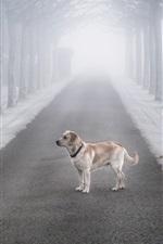 iPhone fondos de pantalla Niebla, árboles, camino, perro, nieve, invierno