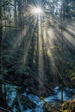 Preview iPhone wallpaper Forest, sun rays, trees, stream
