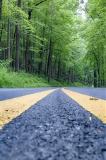 Preview iPhone wallpaper Forest, trees, road