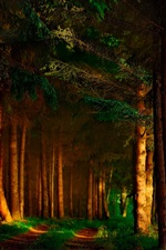 Preview iPhone wallpaper Forest, trees, shadows, sun rays