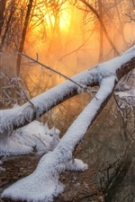 Forest, trees, snow, river, sunrise, morning