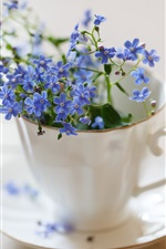 Preview iPhone wallpaper Forget-me-not, blue flowers in cup