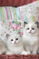 Preview iPhone wallpaper Four white kittens, basket