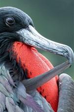 Preview iPhone wallpaper Frigate bird, beak
