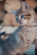 Preview iPhone wallpaper Furry kitten look back