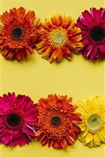 Preview iPhone wallpaper Gerbera flowers background, yellow, red, orange