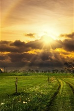 Preview iPhone wallpaper Grass, fields, trees, clouds, sun rays