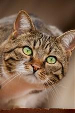 Cachorro de gato olhos verdes