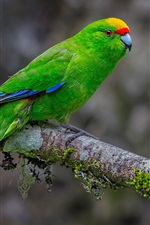 Preview iPhone wallpaper Green feather parrot, tree branch, moss