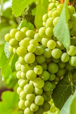 Preview iPhone wallpaper Green grapes, delicious fruit, leaves