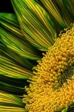 Green petals flower, pistil