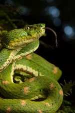 iPhone fondos de pantalla Serpiente verde en la naturaleza