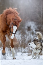 Horse and dog running in the snow