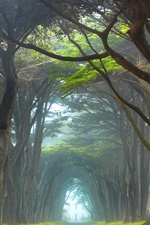 Preview iPhone wallpaper Ireland, trees tunnel, road, fog, grass, morning