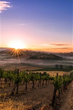 Preview iPhone wallpaper Italy, Tuscany, plantation, sun rays, morning, fog
