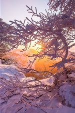 Preview iPhone wallpaper Jura mountains, snow, winter, dawn, sunrise, trees, Switzerland