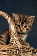 Preview iPhone wallpaper Kitten, basket, gray background