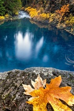 Preview iPhone wallpaper Lake, blue water, maple leaf, autumn