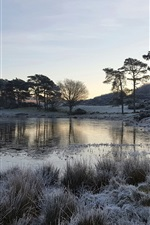 Lake, grass, trees, frost, morning