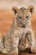 Filhote de leão olhar para você, chão