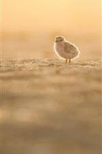 Little bird, beach