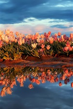 Preview iPhone wallpaper Many tulips, pond, water, clouds