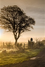 Morning, fog, road, trees, grass, glare