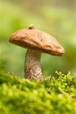 Preview iPhone wallpaper Mushroom, boletus, cranberries, grass