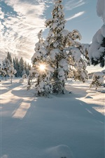 Preview iPhone wallpaper Norway, winter, trees, snow, shadows, clouds, sun rays