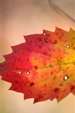 One leaf, twigs, autumn