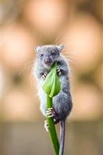 Preview iPhone wallpaper One mouse, green flower bud